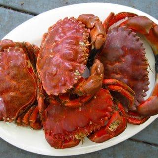 rock crabs