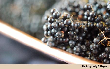 berries main