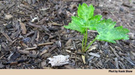 Planning a Winter Garden in Northern California | Hunter Angler ...