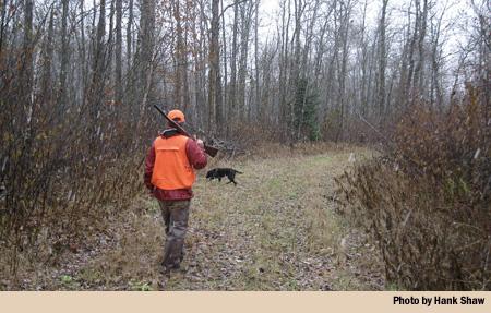 niskie walking the woods