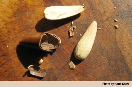 cracked acorn
