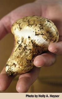Cooking Matsutake Mushrooms