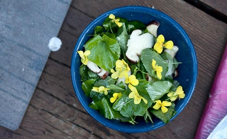 wild violet and raw porcini salad