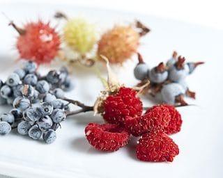 Berries of the Sierra Nevada