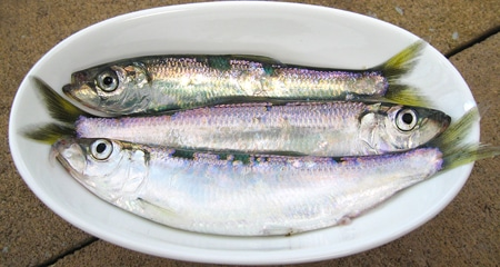 herring-in-bowl.jpg