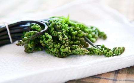 blanched bracken fern