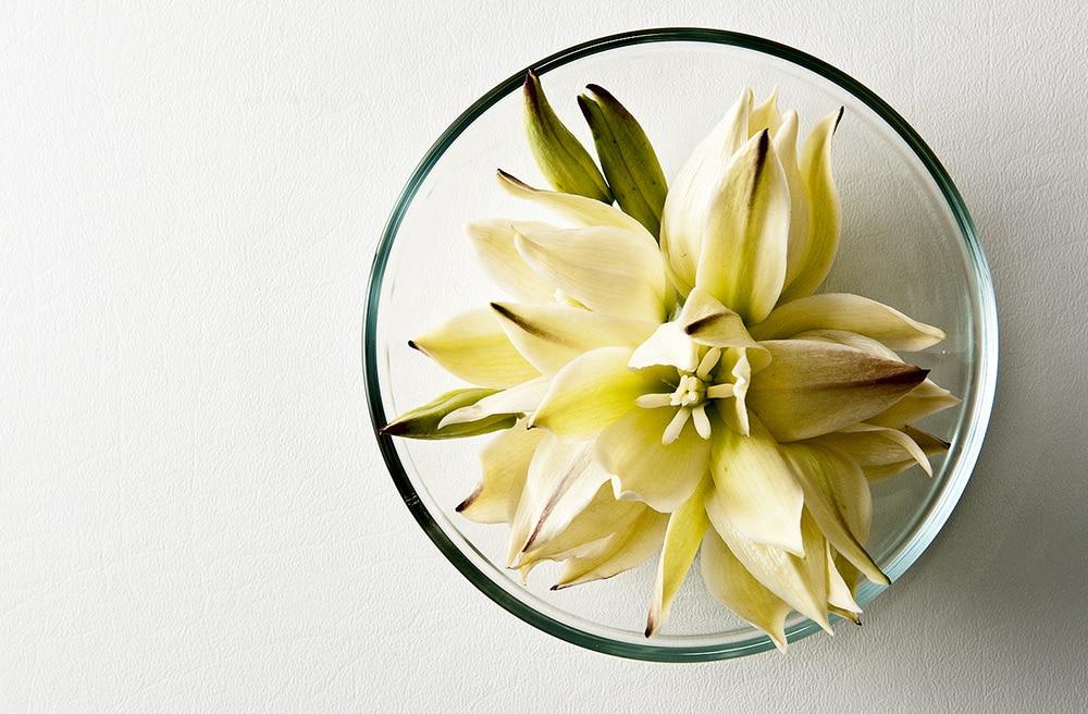 edible yucca flowers