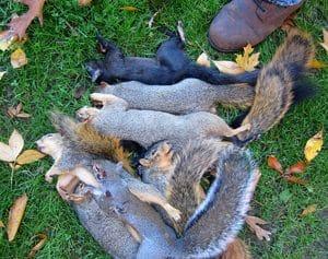 Squirrel hunting in Ohio