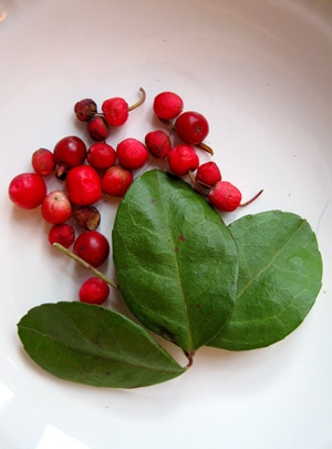 wintergreen leaves and berries