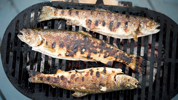 Rainbow trout on grill
