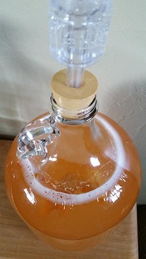 elderflower champagne fermenting