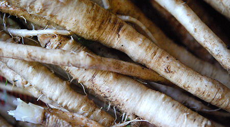 raw-chicory-root-horizontal