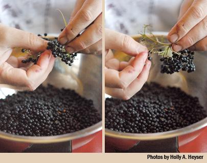 pulling berries