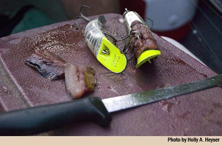 quikfish