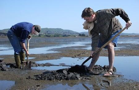 digging clams in Bodega Bay