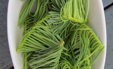 spruce tip syrup