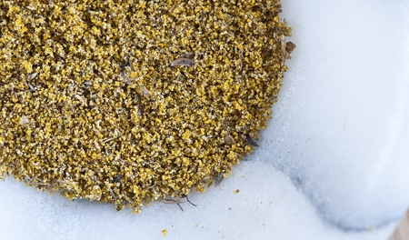 fresh fennel pollen