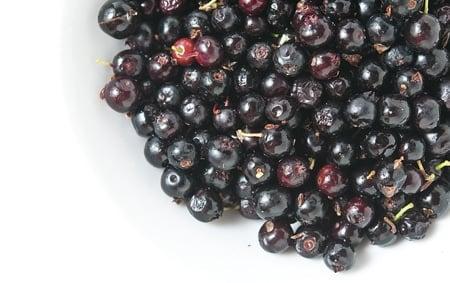 California huckleberries