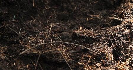 black truffle in the duff