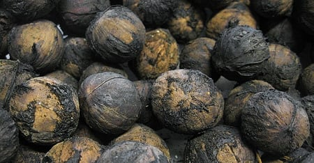 hulled black walnuts