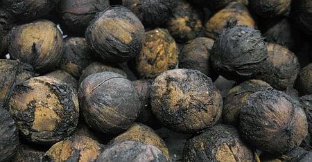 hulled black walnuts