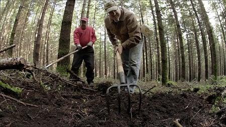 raking truffles