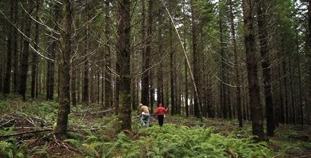 the truffle woods