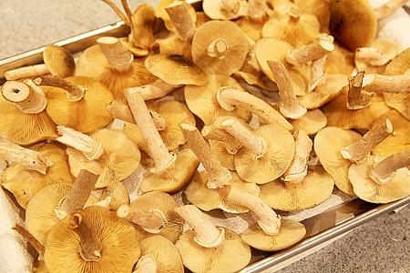 tray of honey mushrooms