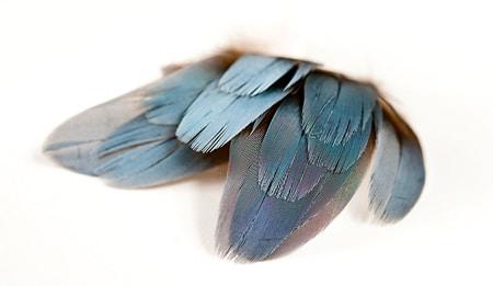 Drake spoonie feathers