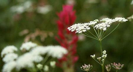 photo by j schmidt courtesy of wikimedia commons - Wild Garden