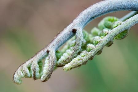 Close up of a bracken fern