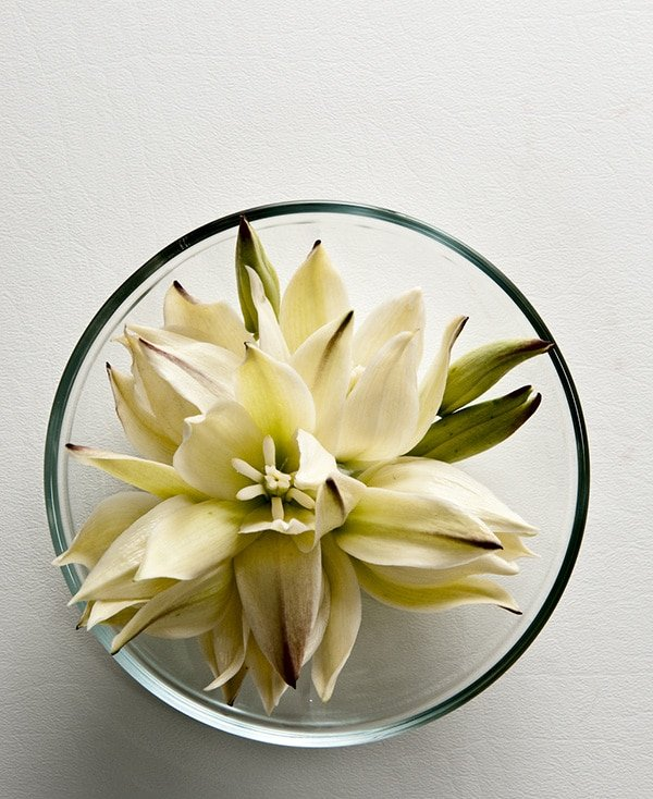 Yucca flowers in a bowl