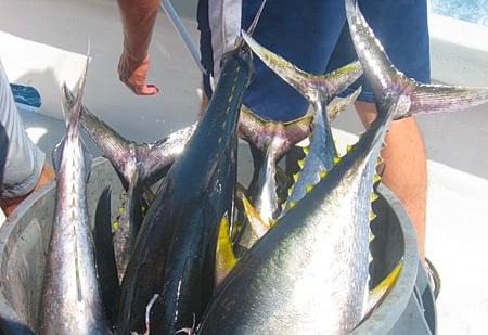 Lots of tuna.