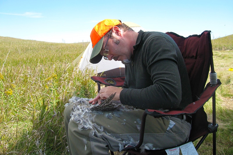 Hank Shaw plucking a grouse