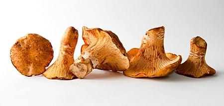An array of chanterelles