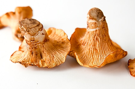 California chanterelles