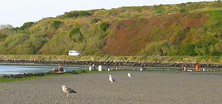 Seagulls on the beach at Bodega Bay