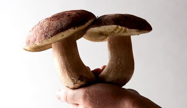 Pretty, fresh porcini mushrooms.