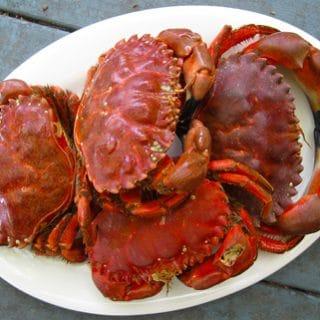 Crabbing on Bodega Bay
