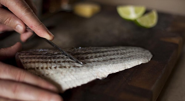 Scraping moisture off skin of a fish.