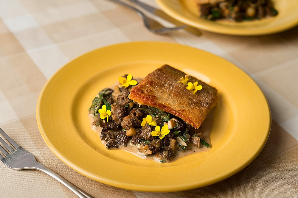 trout with morels recipe