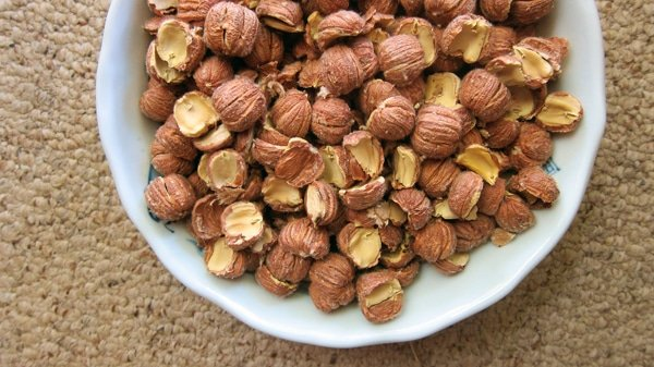 How to make acorn flour making by cold leaching