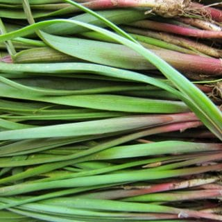 How to Harvest Wild Onions