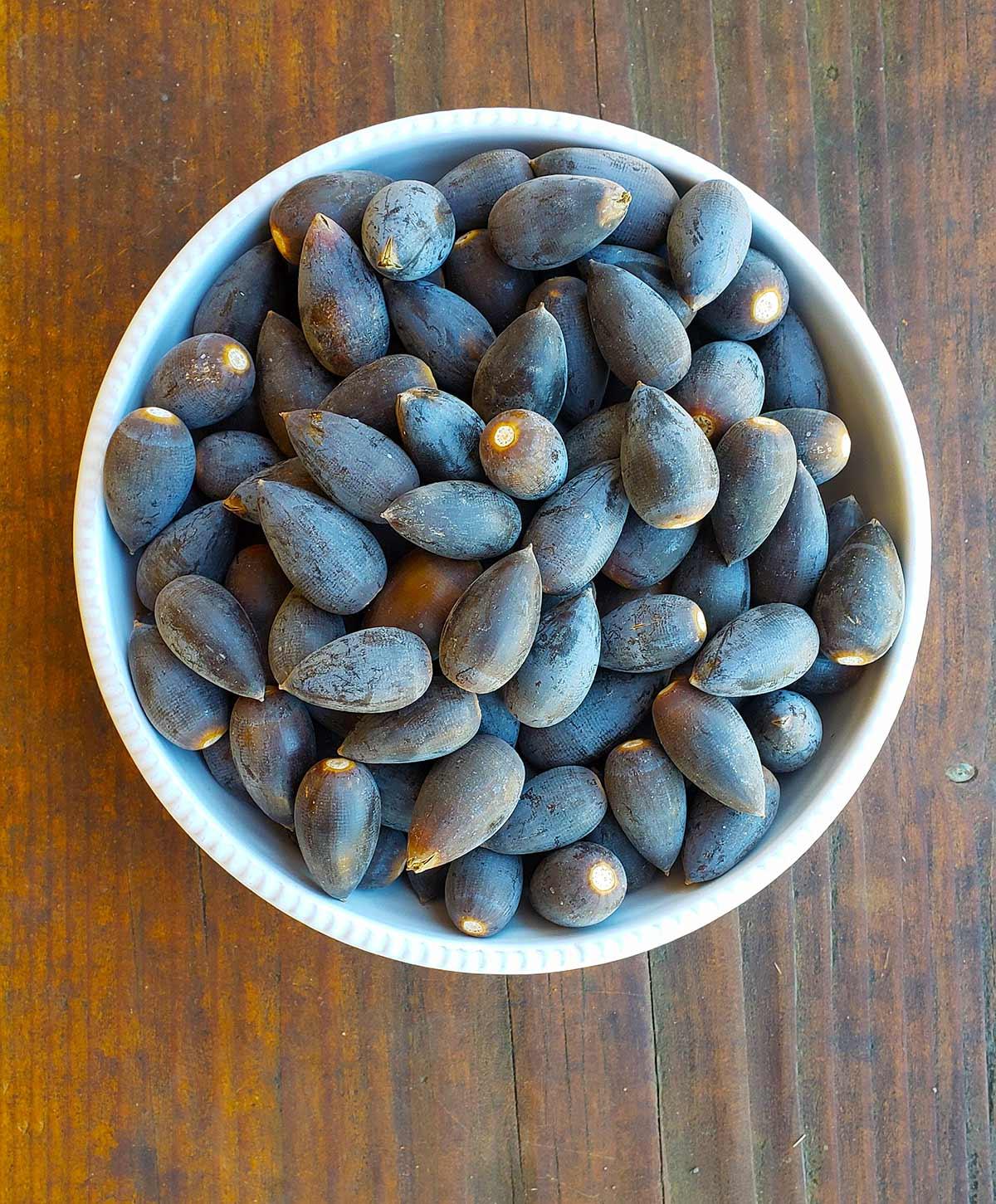 Blue oak acorns in a bowl