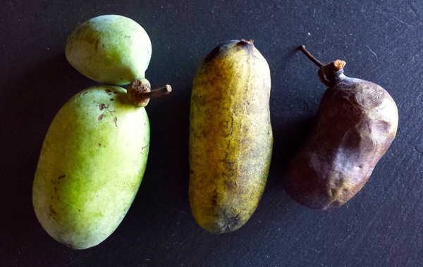 paw paw in various stages of ripeness
