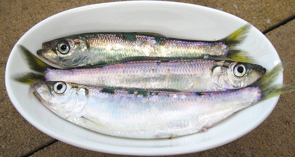 A little bowl of Pacific herring.
