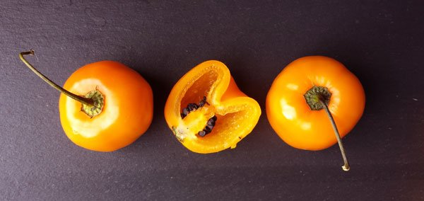 chile manzano, Capsicum pubescens