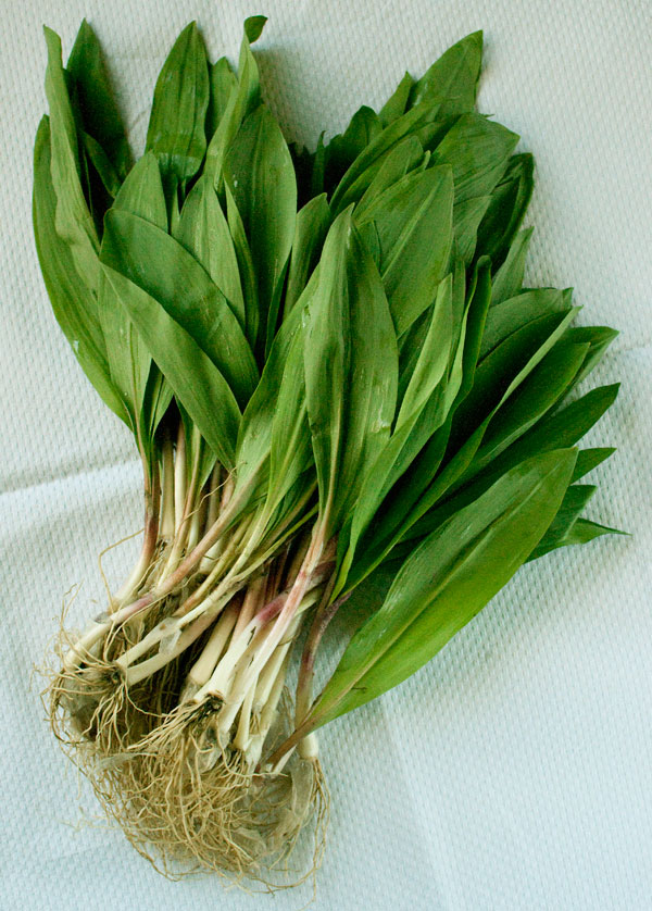 Ramps right out of the woods.