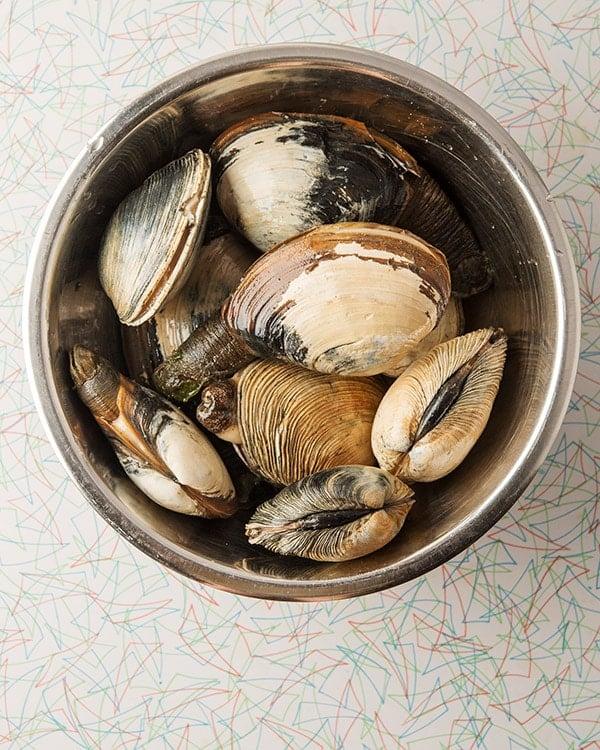 Gaper clams in a bowl