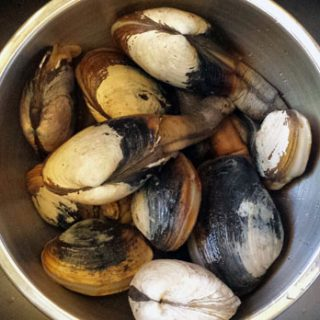 Pacific gaper clams